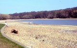 Dried out Ruislip Lido